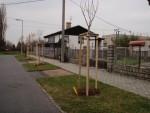 informace-o-vysadbe-stromu-listopad-2011-02.jpg