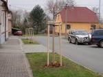 informace-o-vysadbe-stromu-listopad-2013-03.jpg